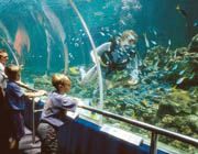Aquarium in Townsville